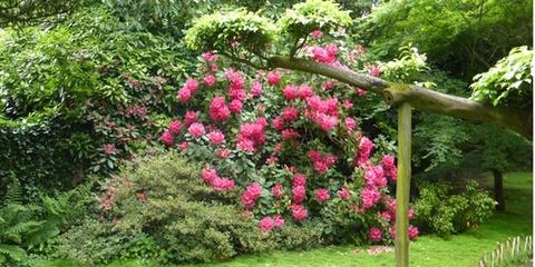 les-fleurs-roses